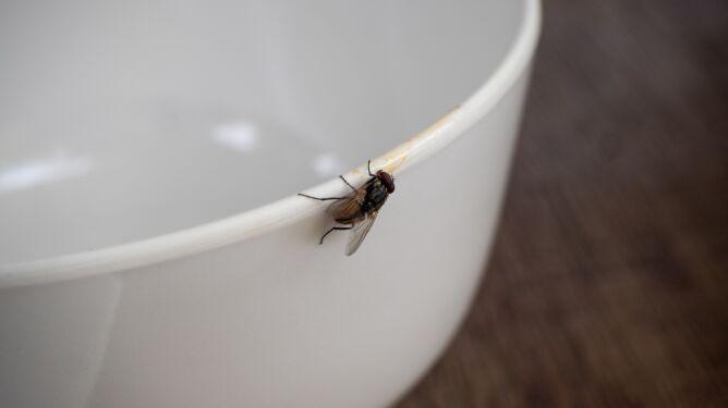 Próbował tylko zabić muchę. Wysadził część domu
