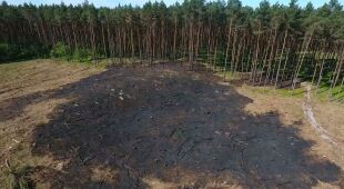 Najczęstszą przyczyną pożarów lasów jest działalność człowieka