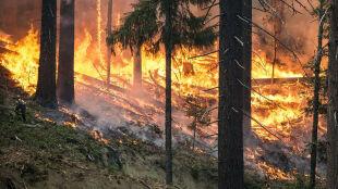 """Ponad pięć tysięcy pożarów lasów w tym roku. """"Wystarczy jedna iskra"""""""